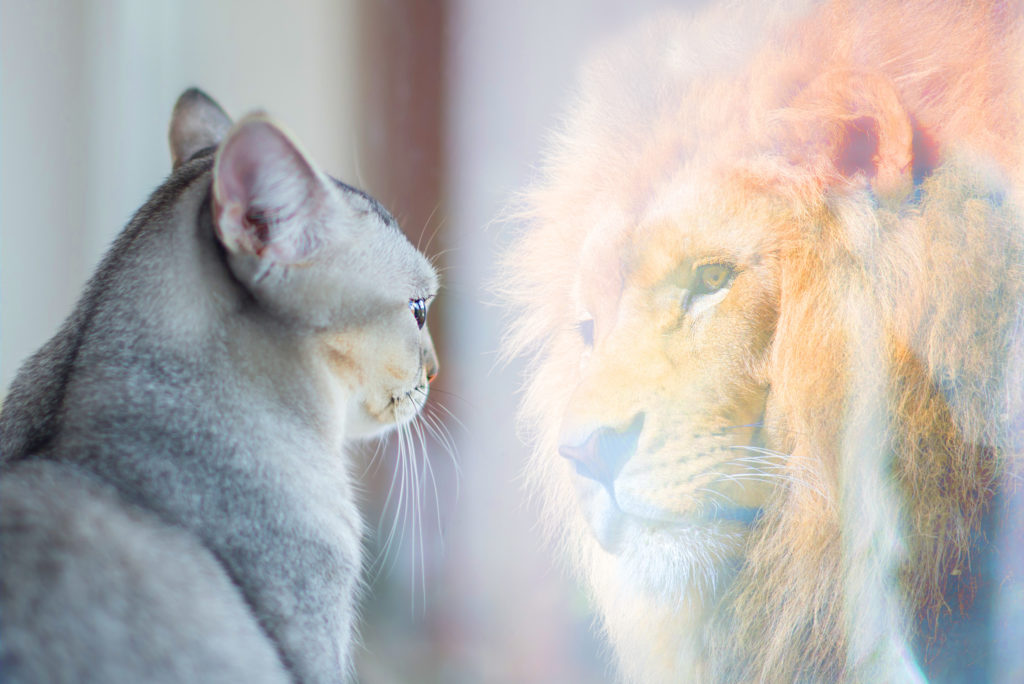 LeadQuine Cat sees Lion Confidence